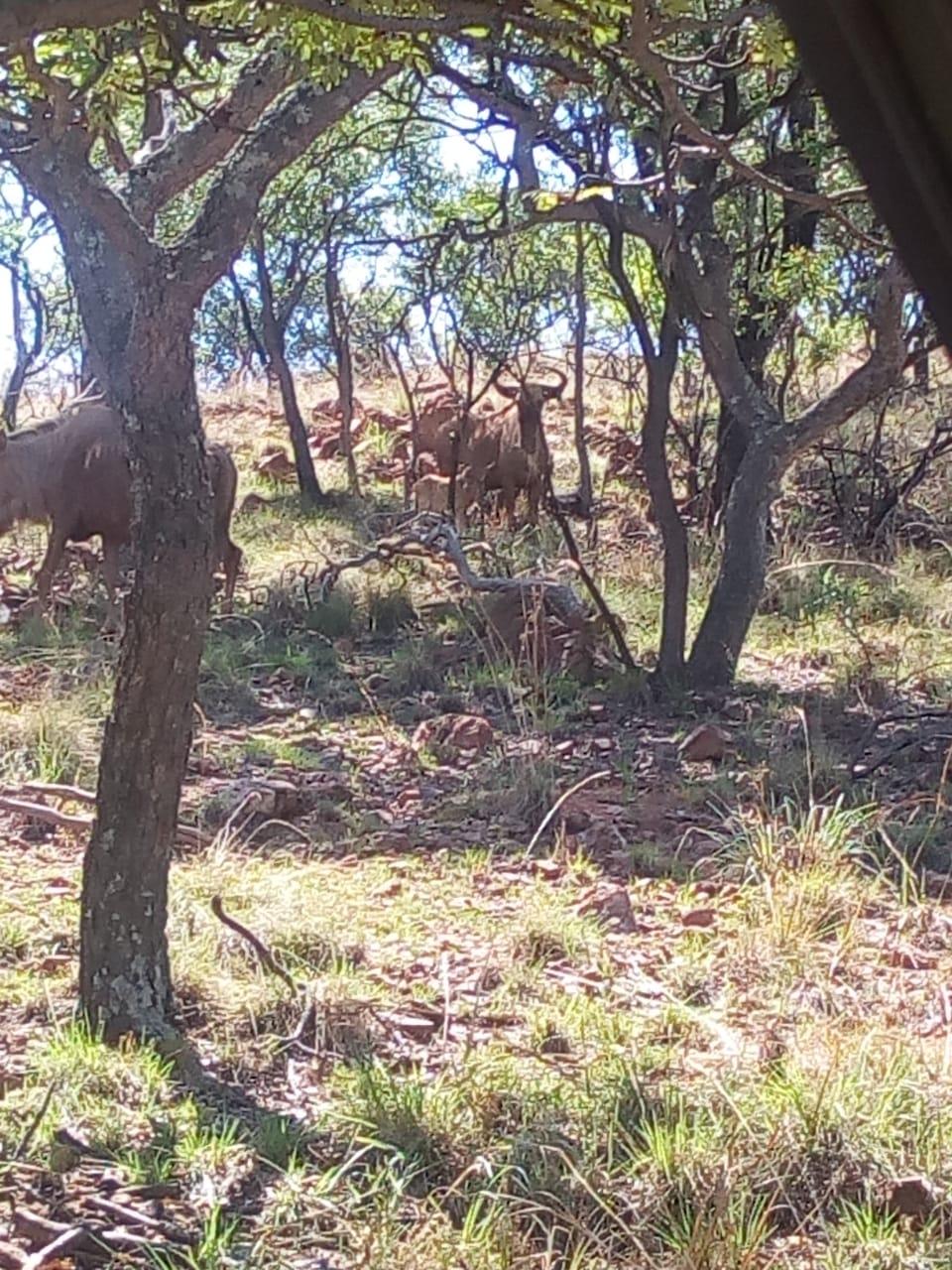 Brush Country Studios South Africa, PO Box 2035, 12 OF THE FARM BAKOVENKRANS 192, MODIMOLLE, 0510, SOUTH AFRICA